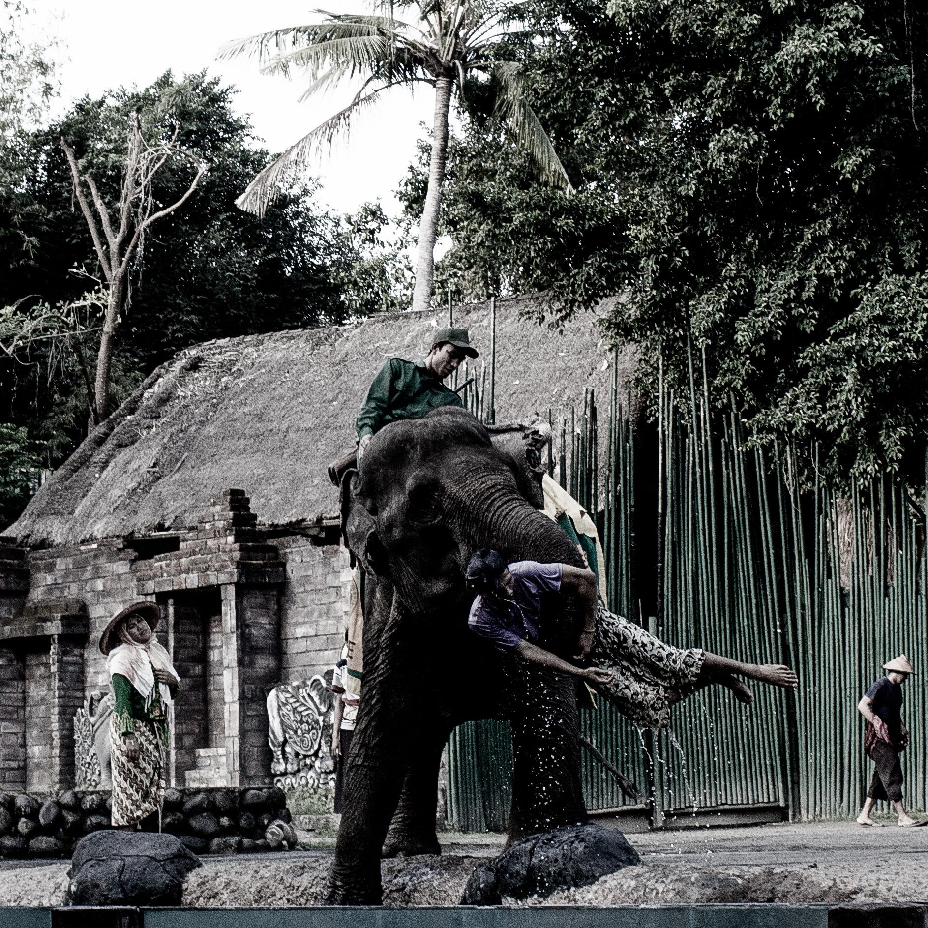 (2015) Bali 8