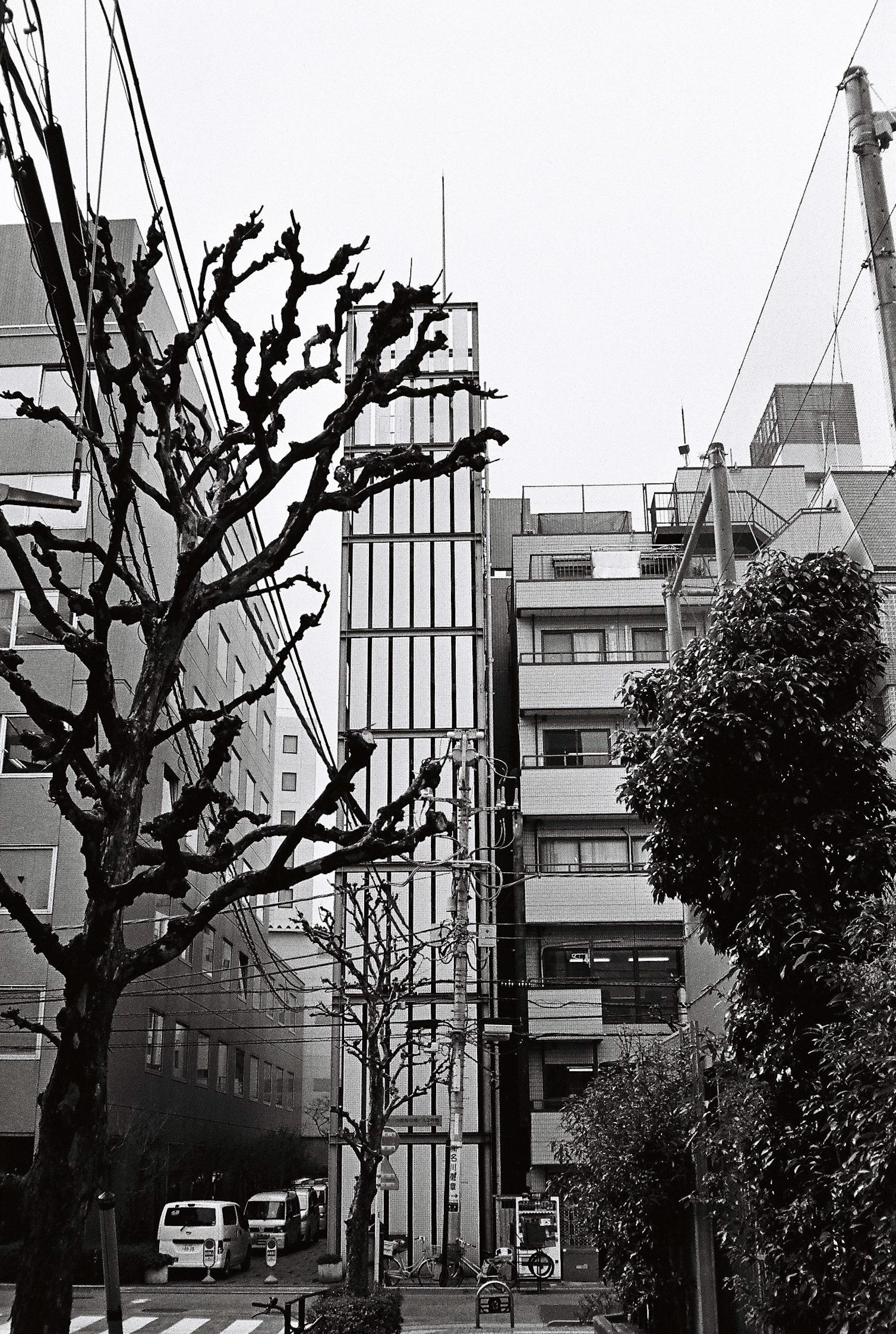 (2015) Tokyo 3